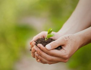 stewardship-business-value-for-growth